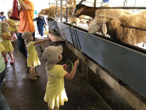 Trường mầm non Himawari Kindergarten - Hoài Đức, Hà Nội