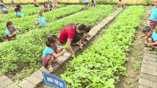 Cô trò trường mầm non Phú Yên với hoạt động nhổ cỏ dại