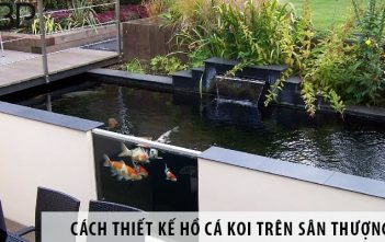 Cách thiết kế hồ cá Koi trên sân thượng tiết kiệm diện tích