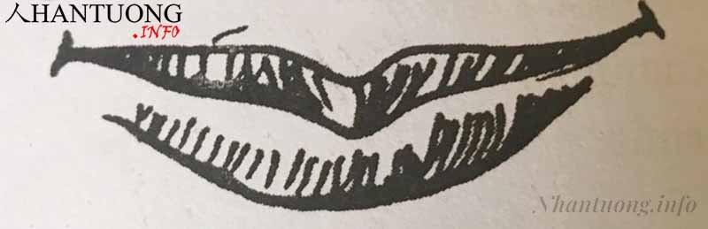 Hình dáng tướng miệng cánh cung