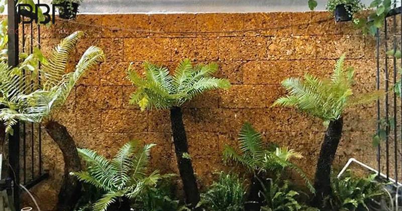 Dương xỉ thường được tìm thấy ở những nơi ẩm thấp và có bóng râm