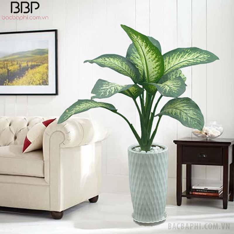 Cây to thường trồng trang trí trong phòng khách