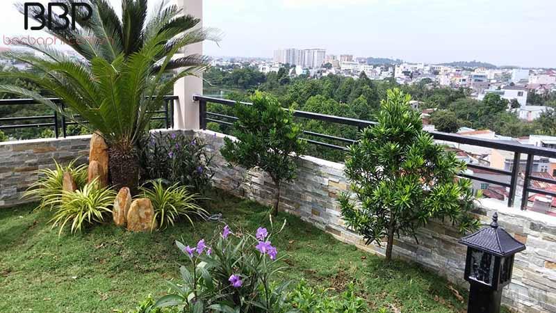 Trồng cây Vạn Tuế trong sân vườn