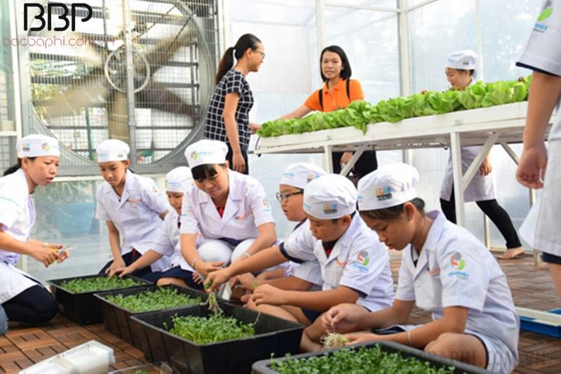 Mô hình trồng rau của trường tiểu học Nguyễn Văn Trỗi
