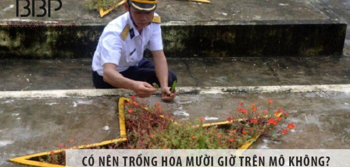 Có nên trồng hoa mười giờ trên mộ không? Trồng có tốt không?